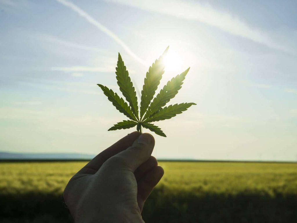 OrganiGram-Medical-Cannabis-Class-Action